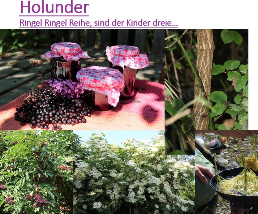Holunder