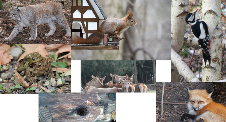 Tiere Wald